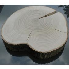 Duży plaster drewna topolowego o śr. 45 - 60 cm!
