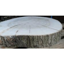 Duży plaster drewna topolowego o śr. 60 - 70 cm!