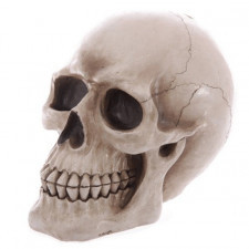 Duża realistyczna czaszka - skarbonka
